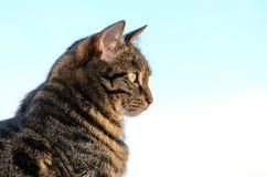 Katzengetigerte katze in der Farbe gegen den Himmel Lizenzfreies Stockbild