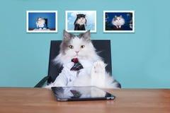 Katzengroßer chef im Büro Stockfotografie