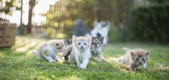Katzengruppe stockfotografie