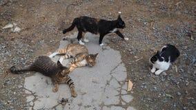 Katzengruppe Lizenzfreie Stockbilder