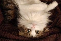 Katzenhängen Lizenzfreies Stockfoto
