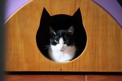 Katzenhaus lizenzfreies stockbild