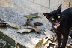 Katzenhaustiertier Lizenzfreies Stockbild