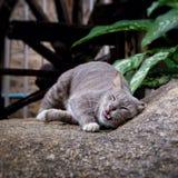 Katzenhaustiertier Lizenzfreie Stockfotos