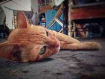 Katzenhaustiertier stockbilder