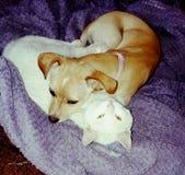 Katzenhundeliebesherz lizenzfreies stockfoto