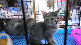 Katzenjunge in Souq stock video footage