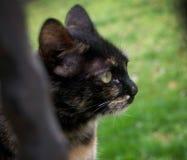 Katzenkätzchen Stockbilder