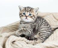 Katzenkätzchen, das auf Trikot liegt Stockfotos