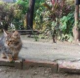 Katzenkätzchen mit verärgertem Gesicht lizenzfreie stockfotografie