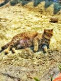 Katzenkatze Stockbilder