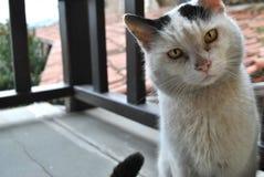 Katzenkatze stockfotos