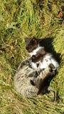 Katzenkatzen Kitten Fight Gras-Grün lizenzfreie stockbilder