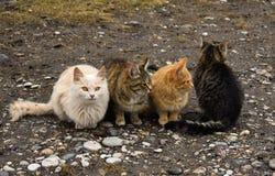 Katzenkatzenhaustier-Kätzchenwildes obdachloses Streutier lizenzfreie stockbilder