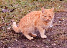 Katzenkatzenhaustier-Kätzchenwildes obdachloses Streutier stockfotos