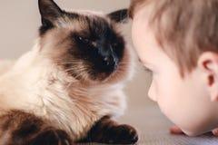 Katzenkindbalinese zusammen spielen begleiter lizenzfreie stockfotografie