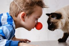 Katzenkindbalinese zusammen spielen obacht lizenzfreie stockfotografie