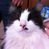 Katzenlächeln Stockbild