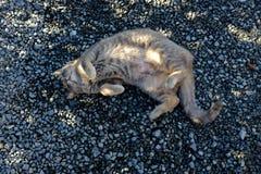 Katzenlegen Stockbild