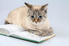 Katzenleser Stockfoto