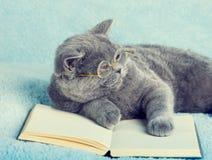 Katzenleser Lizenzfreie Stockfotografie