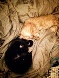 Katzenliebe Stockfoto