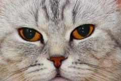 Katzenmündung Stockbilder