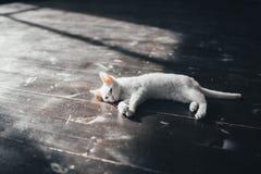 Katzenmiezekatze wenig weicher weißer Hintergrund nach innen Stockfotografie