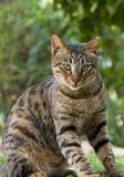 Katzenmodellblick Lizenzfreie Stockfotografie