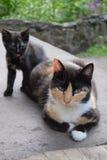 Katzenmutter mit ihrem Kätzchen Lizenzfreie Stockbilder