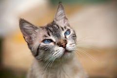 Katzennahaufnahme Stockbild