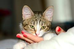 Katzennahaufnahme Lizenzfreie Stockfotos