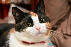 Katzennahaufnahme Stockfotos