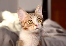 Katzennahaufnahme Stockfoto