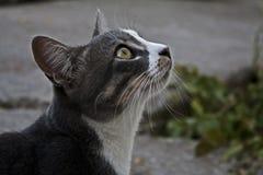 Katzennahaufnahme, die den Himmel betrachtet Lizenzfreie Stockfotografie