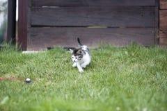 Katzenpferdeschlittenglocke Stockfotografie