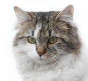 Katzenporträt Stockfoto