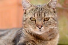 Katzenporträt Stockfotos