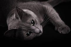 Katzenporträt Stockbilder