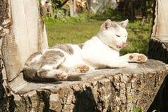 Katzenreinigung Lizenzfreie Stockfotos