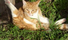 Katzenreinigung stockfotos