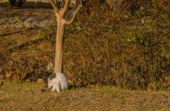 Katzenreinigung selbst im vorderen Baum Lizenzfreie Stockfotos