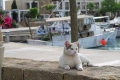 Katzenrest durch den Jachthafen, vor einem Fischerboot Stockbilder