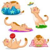 Katzensammlung Stockbild