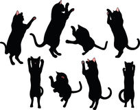 Katzenschattenbild in der Verpackenhaltung lokalisiert auf weißem Hintergrund Lizenzfreie Stockfotografie