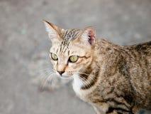 Katzenschauen Stockfotos