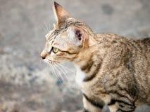 Katzenschauen Stockbilder