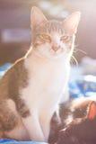 Katzenschauen und Aufflackernlicht Stockfotografie