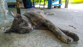 Katzenschlaf Stockbild