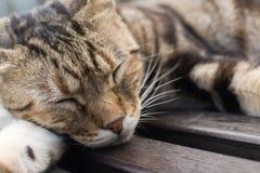 Katzenschlaf auf einem Stuhl Lizenzfreies Stockfoto